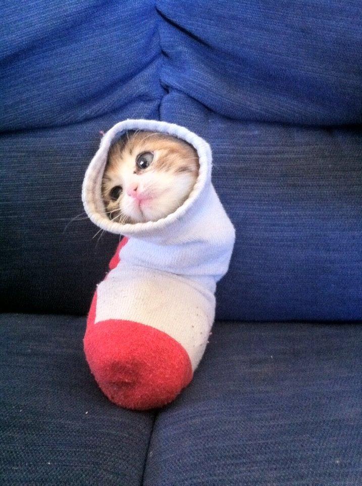 Katze in der Socke