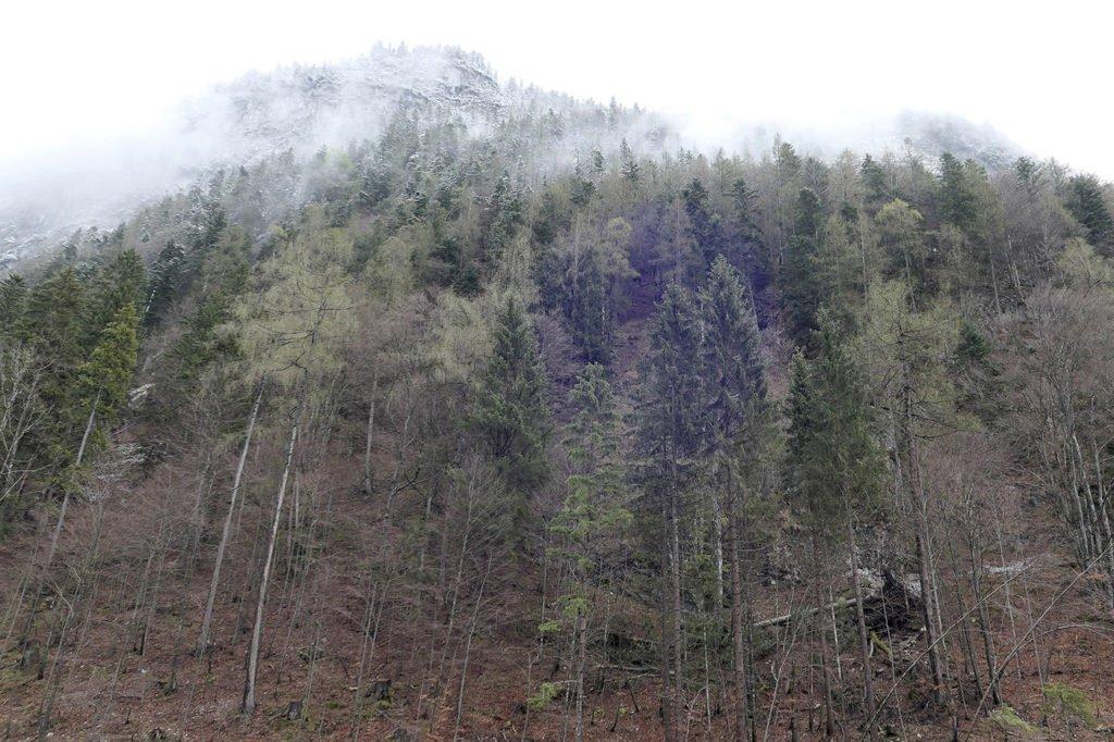 Leutasch im Nebel